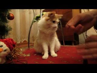 Кот зачищает провода